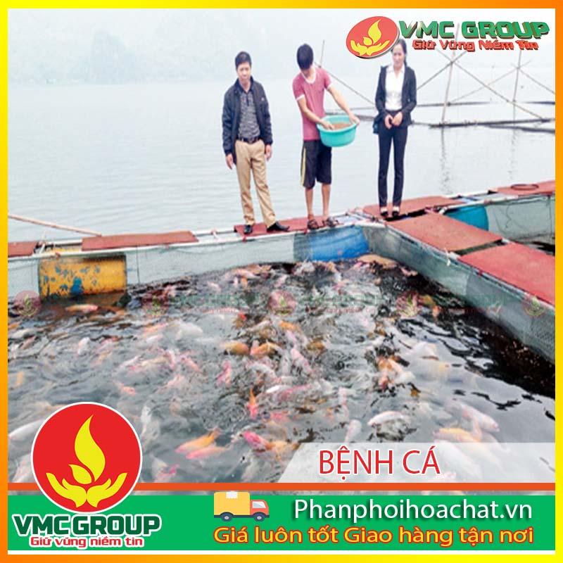 mot-so-benh-thuong-gap-tren-ca-nuoi-long-be-tai-mot-so-tinh-mien-bac-va-bien-phap-phong-tri-ky-2